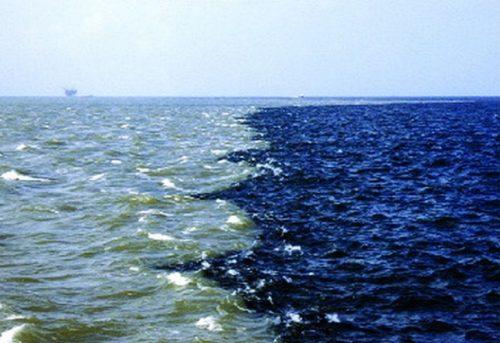 Le zone morte sono in espansione e stanno soffocando gli oceani