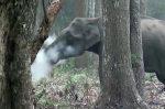 Elefante emette fumo dalla bocca, di cosa si tratta?