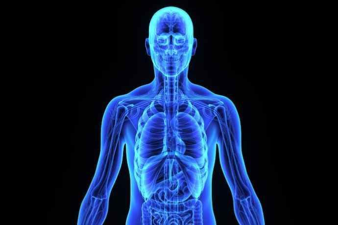 Scoperto nuovo organo del corpo umano: è uno dei più grandi