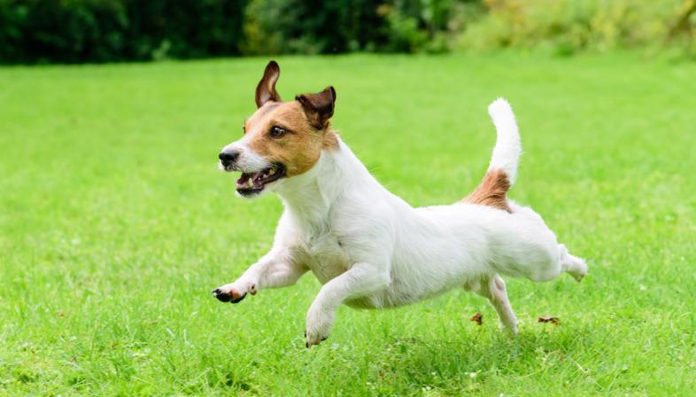 """I cani riconoscono davvero le """"persone cattive""""?"""
