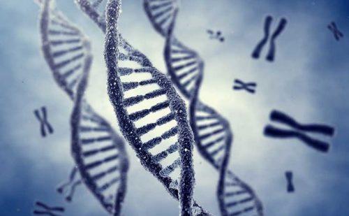 Gp-Write: il progetto per sviluppare super cellule resistenti ai virus