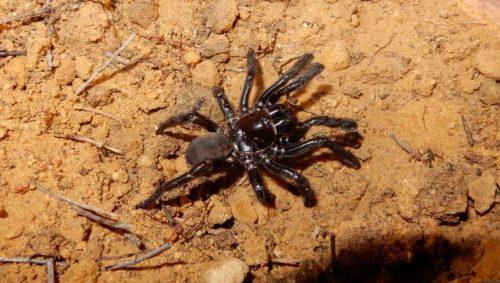 Morto il ragno più vecchio del mondo, aveva 43 anni