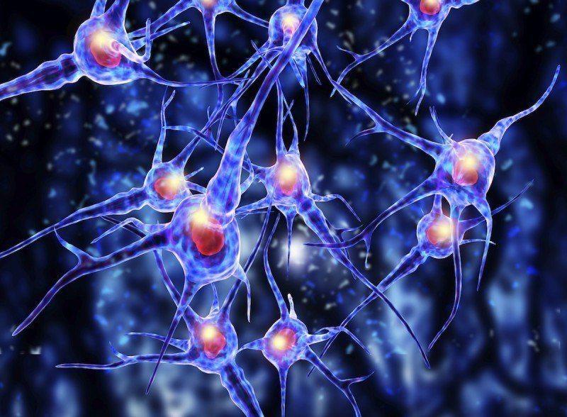 Mini cervello umano completo riprodotto in laboratorio