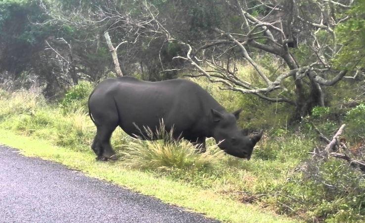 Morti otto rinoceronti neri a rischio estinzione, disastro in Kenya