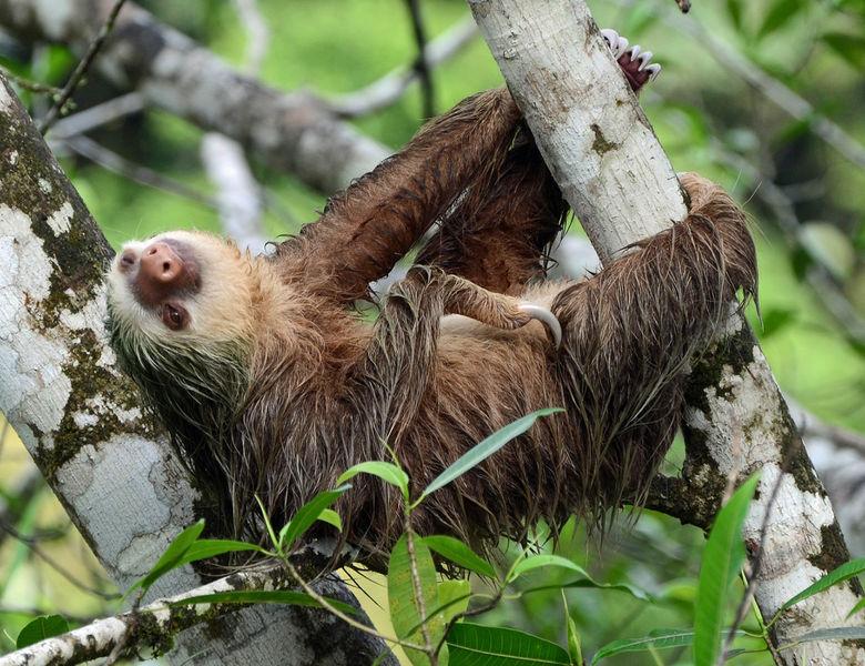 Le specie animali pigre hanno una vita più lunga, lo studio