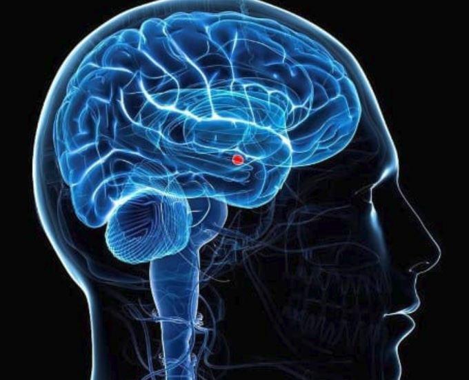 Cervello, scoperto un circuito che ordina le esperienze in base alle emozioni