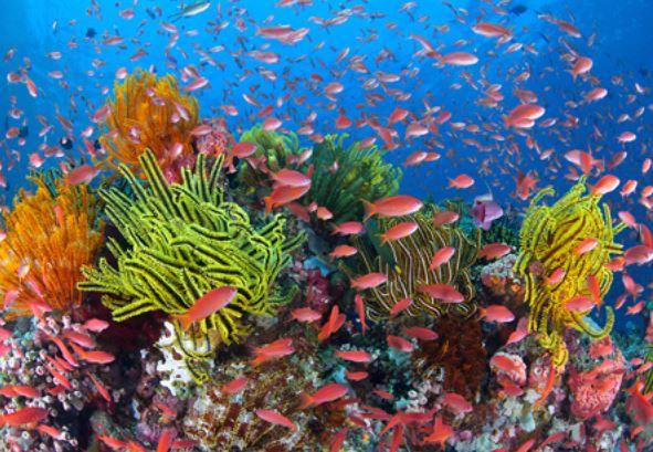 Oceani: i fondali 100 volte più ricchi di vita rispetto alla superficie