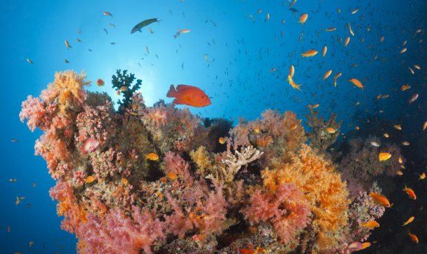 Scoperta immensa barriera corallina al largo della Carolina del Sud