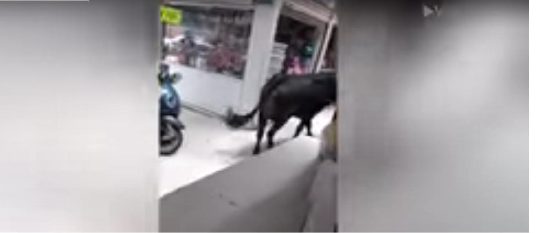 Toro entra in centro commerciale: paura a Città del Messico