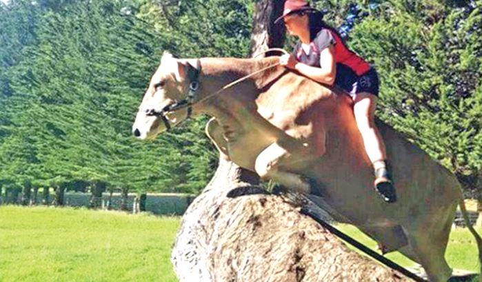 Ragazza insegna a una mucca a saltare gli ostacoli
