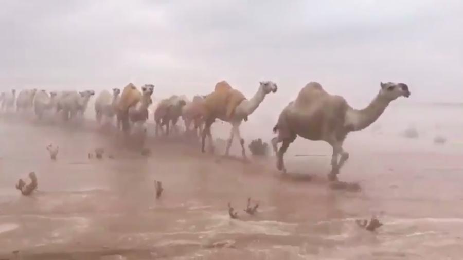 Arabia Saudita, la pioggia inonda il deserto: chiuso l'aeroporto di Kuwait City. Il video