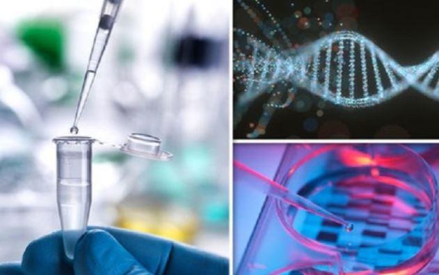 Esperimento con Dna umano modificato: ricercatore annuncia un'altra gravidanza