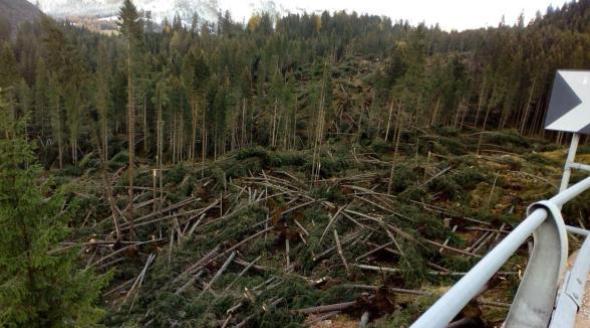 Maltempo Alto Adige, rasi al suolo 1,2 milioni di metri cubi di bosco