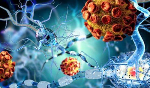 Scoperta molecola anti invecchiamento: potrebbe allungare la vita
