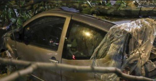 Bufera di vento nel nord-est: alberi cadono e distruggono le auto