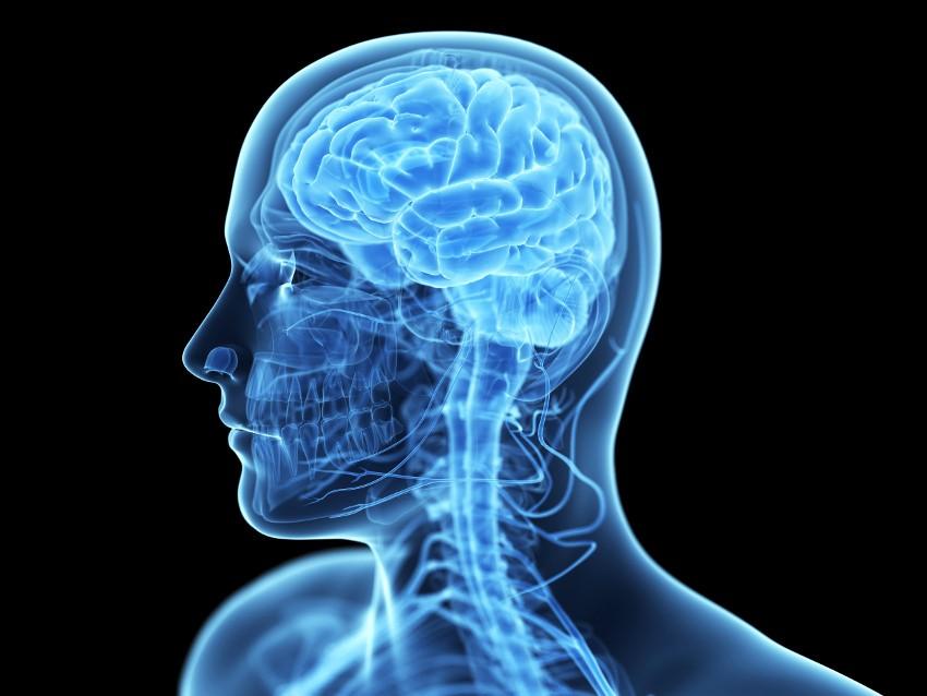 Intelligenza e forma del viso: scoperto un legame