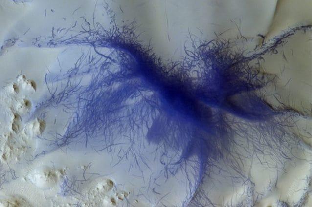 Tarantola blu su Marte: lo scatto di ExoMars