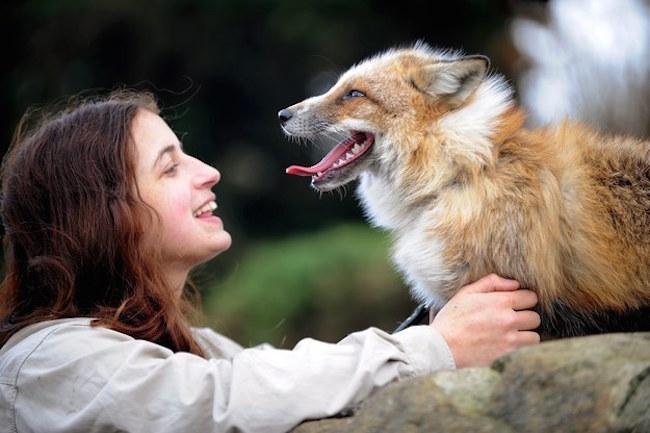 Nell'Età del Bronzo le volpi erano addomesticate, la scoperta