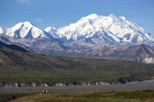 Scioglimento dei ghiacci: 66 tonnellate di escrementi potrebbero invadere l'Alaska
