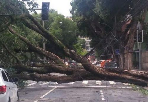 Tempesta impressionante si abbatte su Rio de Janeiro, sradicati 63 alberi