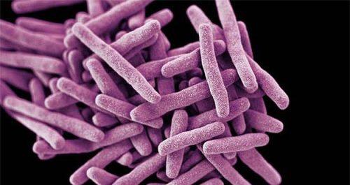 Candida Auris: l'allarme sul fungo che uccide in tre mesi