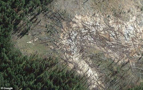 Yellowstone, si riscalda un'area del parco: muoiono gli alberi