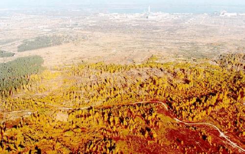Chernobyl: drone sorvola la 'Foresta Rossa', l'area più radioattiva al mondo