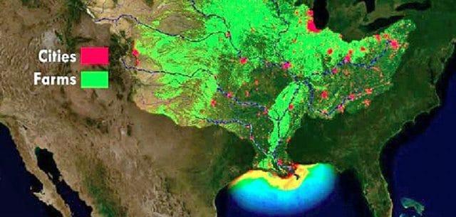 Golfo del Messico: la zona morta sta raggiungendo dimensioni record