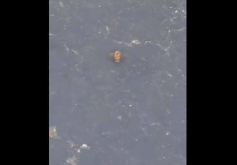 Strano fenomeno dopo il violento terremo M 7.1: decine di api muoiono