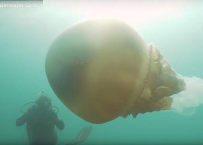 Inghilterra: si tuffa in acqua e incontra gigantesca medusa. Il video