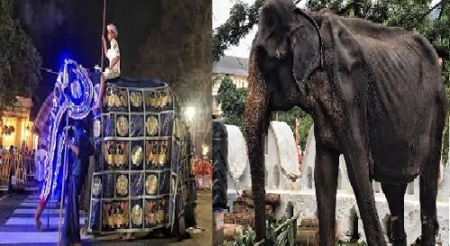 Sri Lanka: l'elefante costretto a sfilare malato e denutrito