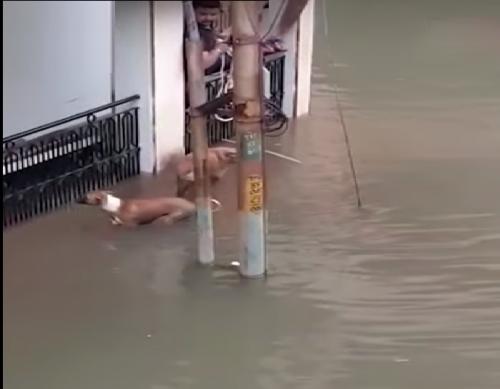 India: le inondazioni colpiscono Vadodara. Coccodrilli in strada. Il video