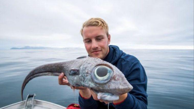 """Un mostruoso """"pesce degli abissi"""" pescato in Norvegia"""