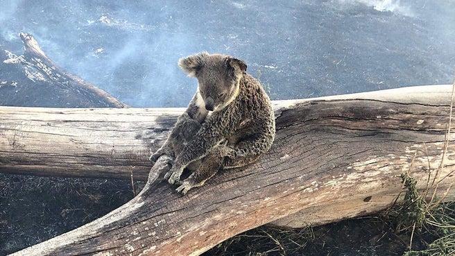 Incendi Australia: oltre 70 roghi nel Queensland, evacuazione della popolazione