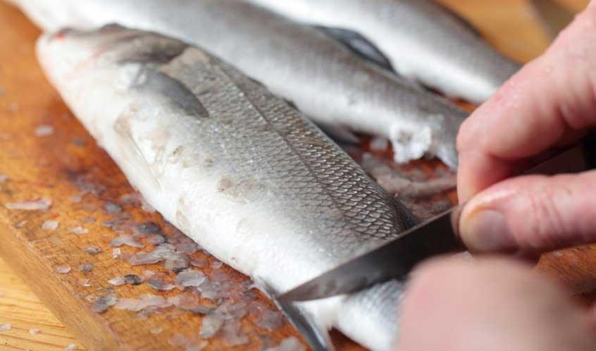 """Il dolore dei pesci ha una """"sorprendente somiglianza"""" con quello umano"""