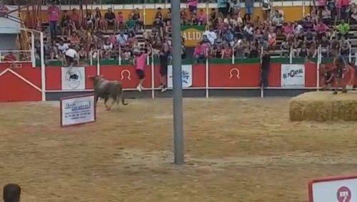 Spagna: toro 'invade' gli spalti. Panico tra il pubblico