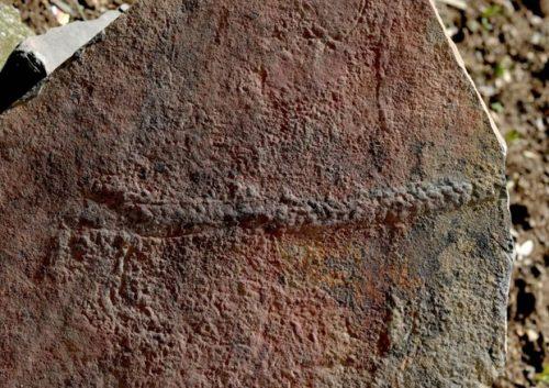 Scoperte le tracce del più antico animale mai vissuto
