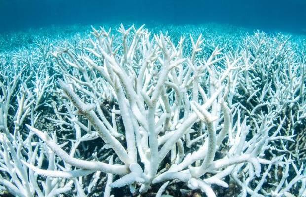 Natura: i coralli morti sono in grado di 'risorgere'