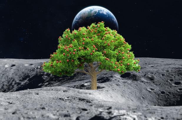 Coltivare su Marte e sulla Luna si può. Dimostrata la fertilità del terreno