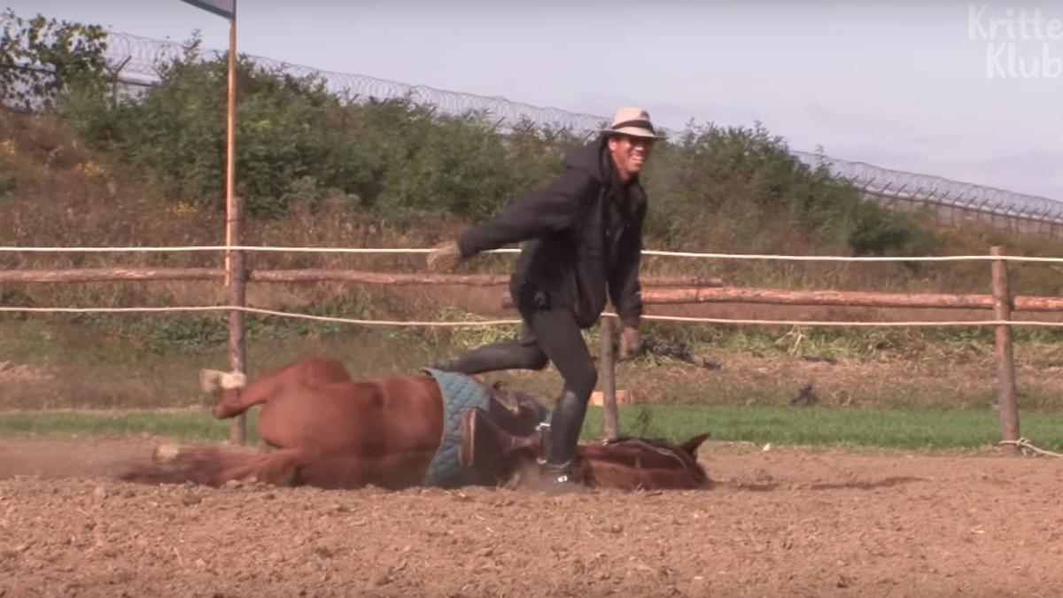 Il cavallo che finge di morire quando viene cavalcato
