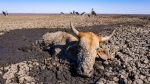 Botswana: la siccità fa strage di animali nell'Okawango