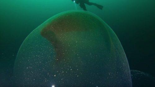Una massa gelatinosa avvistata nell'Oceano Atlantico. Il video