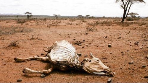 Namibia: la siccità fa strage di animali. L'allarme del governo