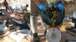 Trovato cervo morto con 7 Kg di immondizia nello stomaco