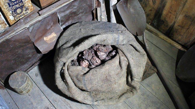 Cipolle di oltre 100 anni in un rifugio antartico. La scoperta