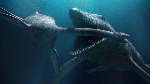 Polonia: i fossili di enorme mostro marino in un campo di grano