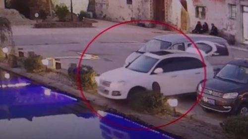 Cane alla guida: auto finisce in una piscina. Il video