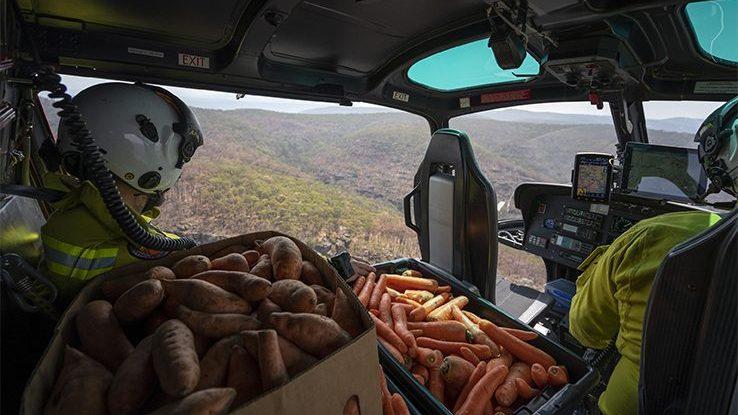 Australia: il National Park lancia cibo dagli elicotteri per gli animali