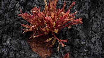 Australia: la vegetazione rinasce dai boschi incendiati