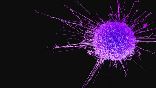 L'allarme dell'OMS: boom di casi di tumore nei prossimi anni
